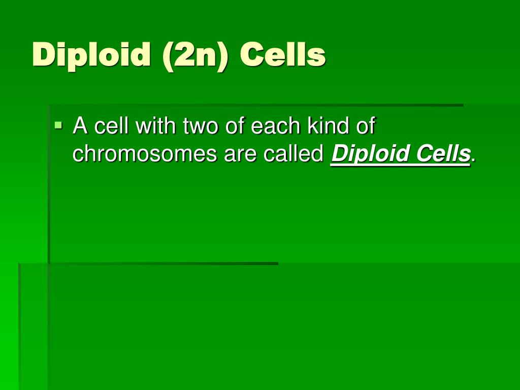Diploid (2n) Cells