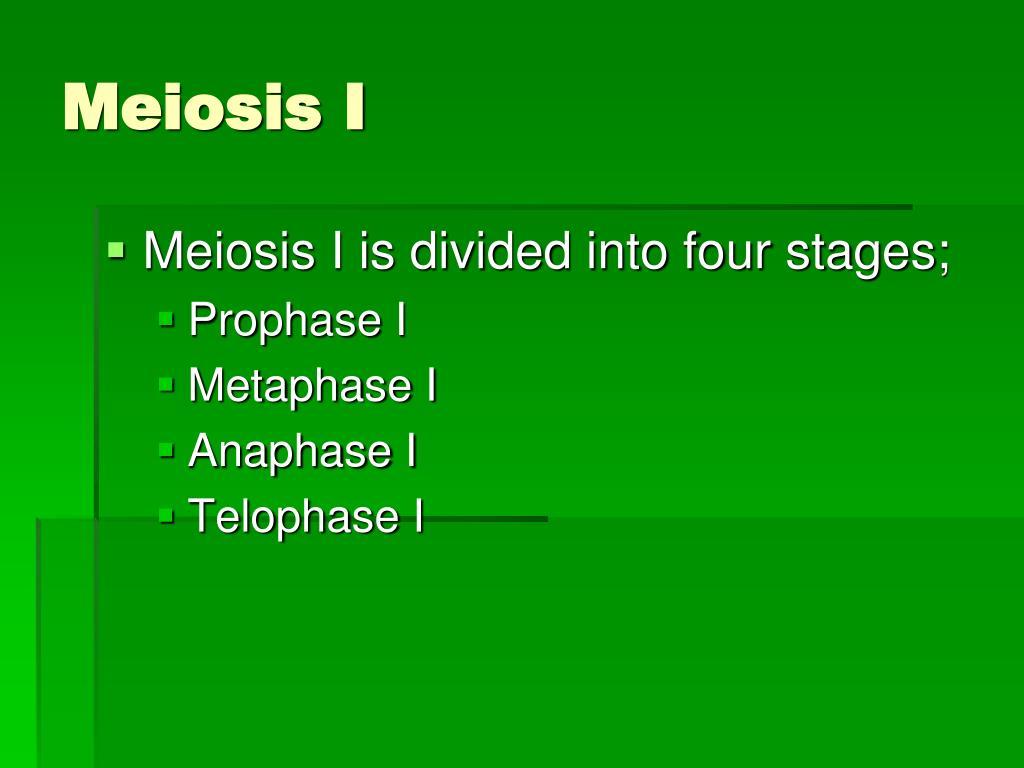 Meiosis I