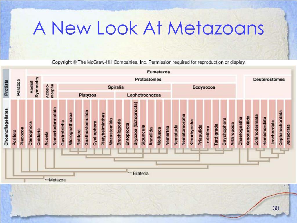 A New Look At Metazoans