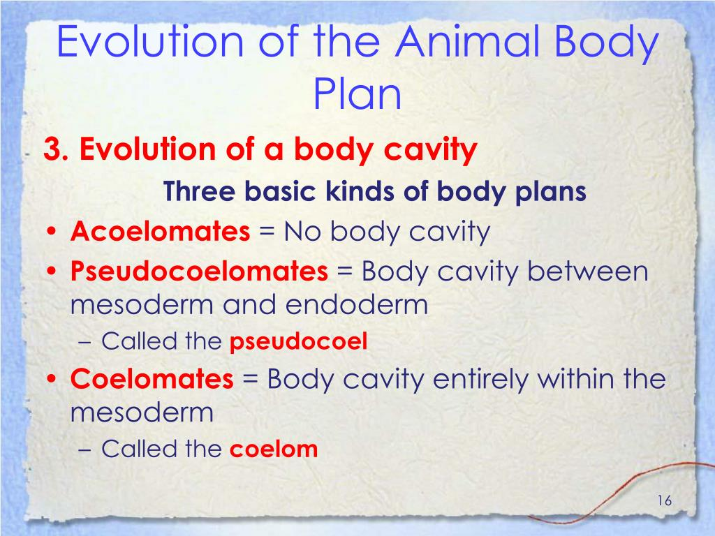 Evolution of the Animal Body Plan