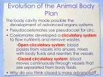 evolution of the animal body plan19