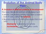evolution of the animal body plan21
