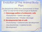 evolution of the animal body plan24