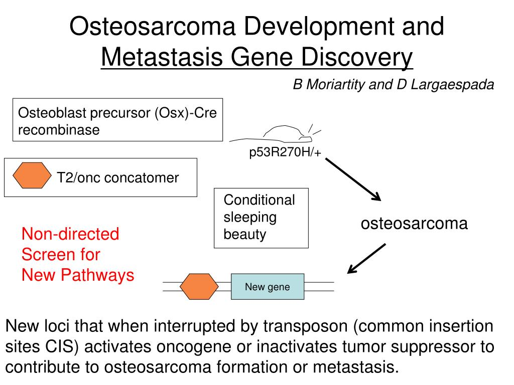 Osteosarcoma Development and