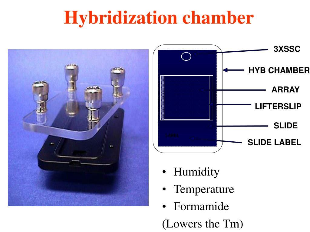 Hybridization chamber