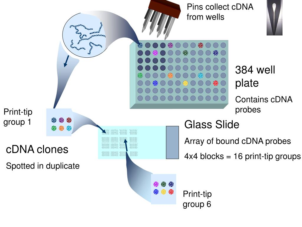 Pins collect cDNA from wells