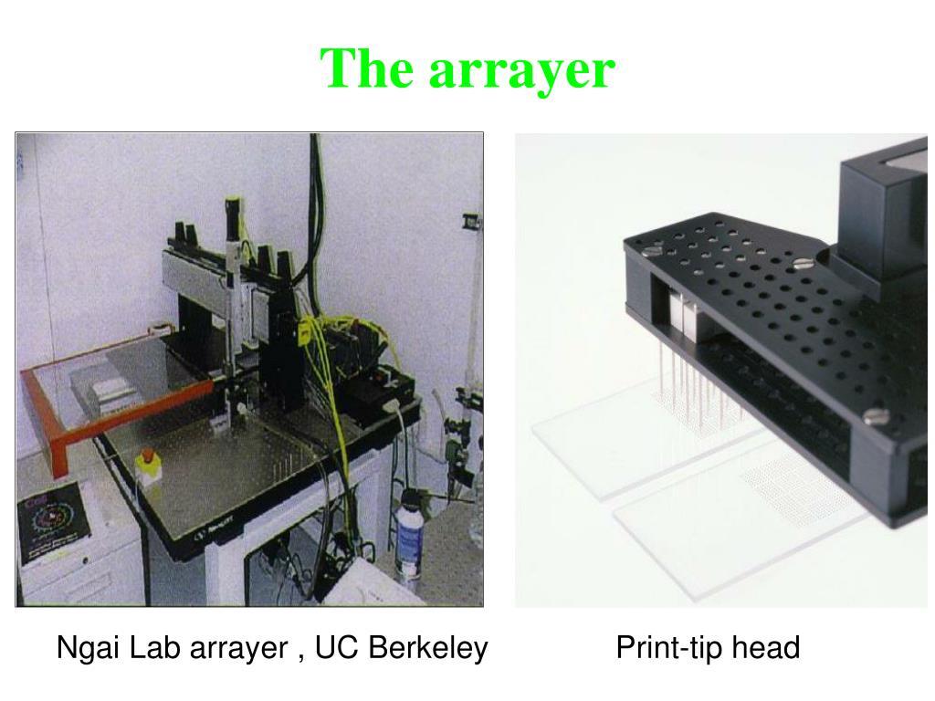 The arrayer