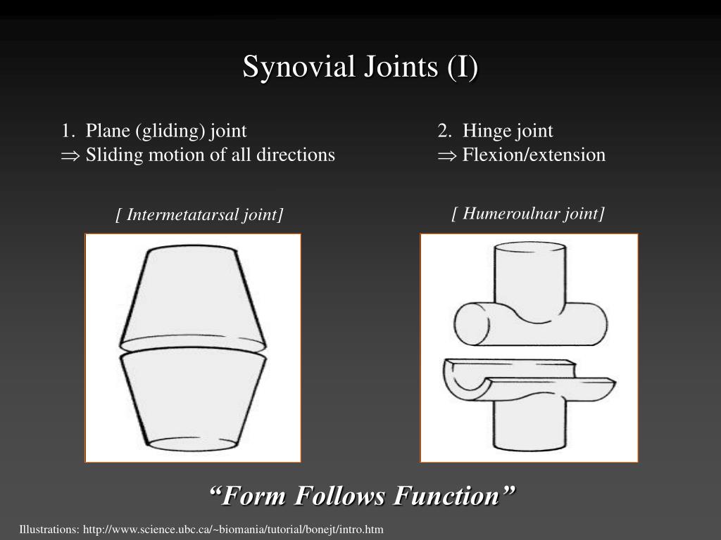Synovial Joints (I)