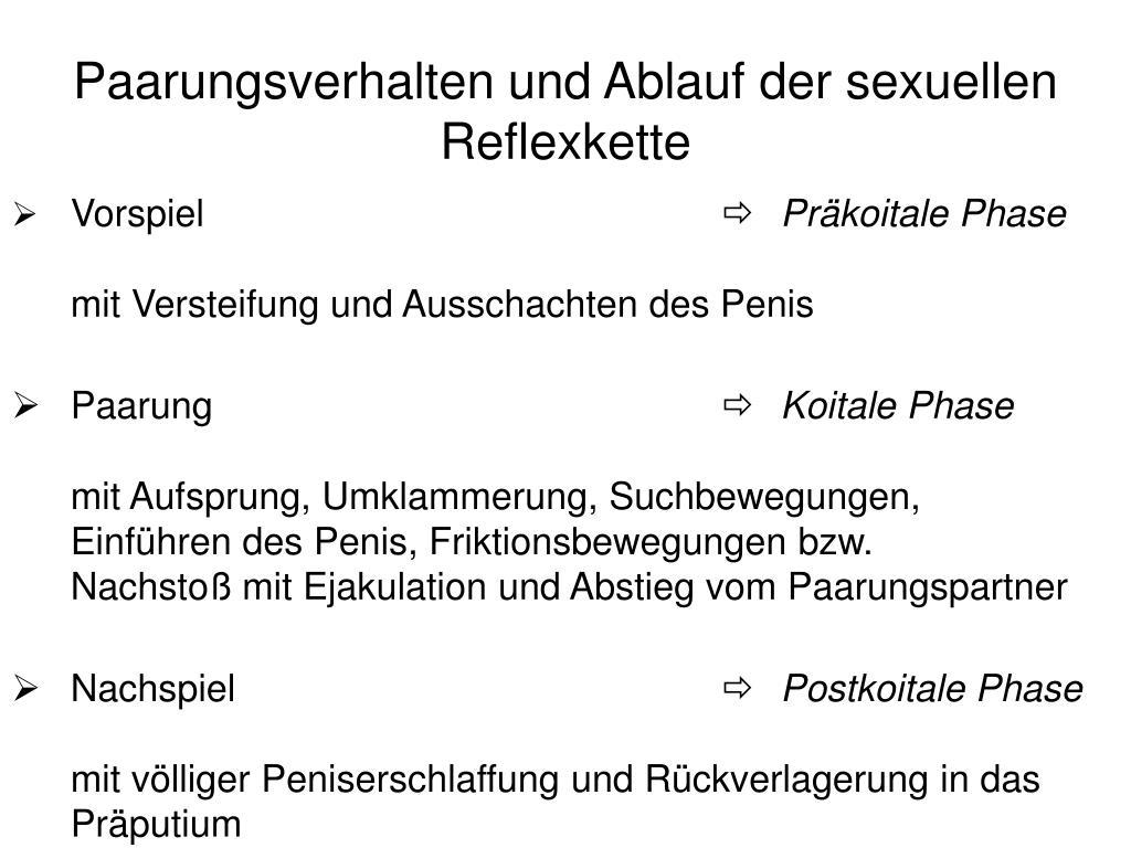 Paarungsverhalten und Ablauf der sexuellen Reflexkette