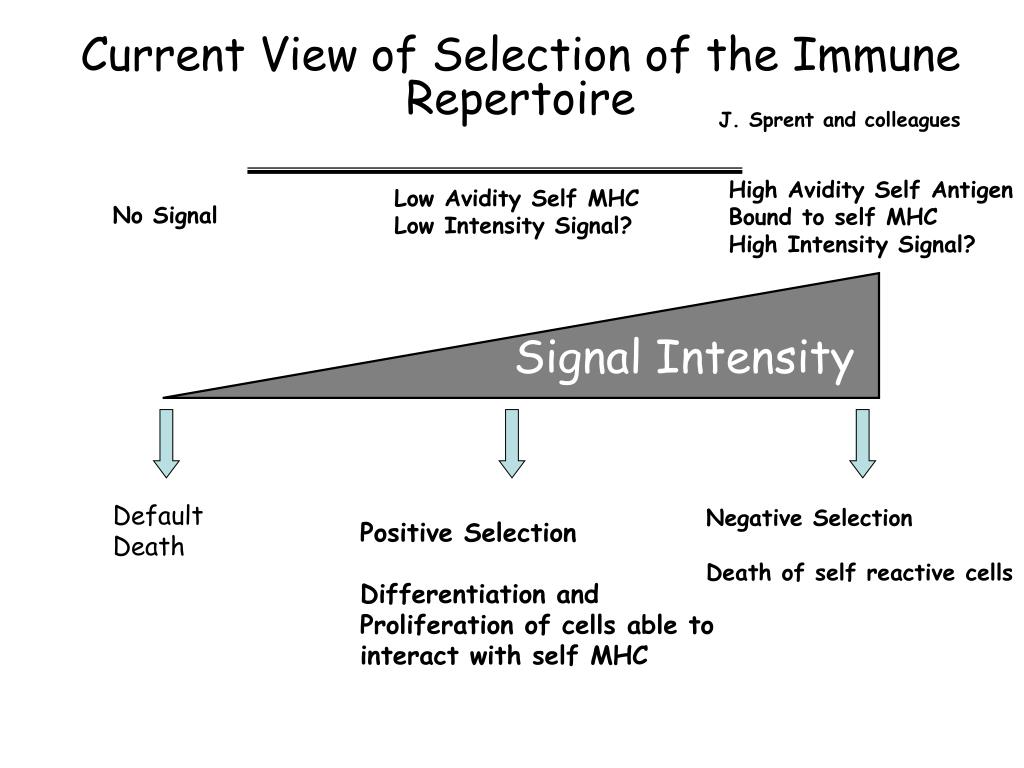 Current View of Selection of the Immune Repertoire