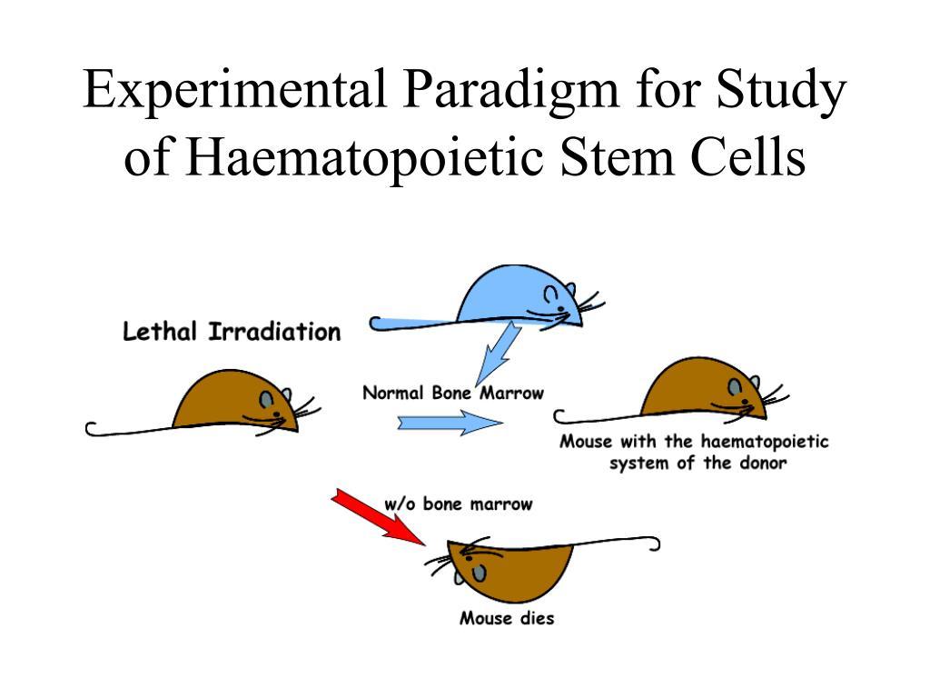 Experimental Paradigm for Study of Haematopoietic Stem Cells