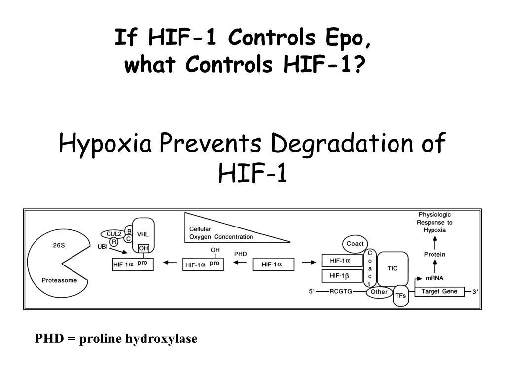 If HIF-1 Controls Epo,