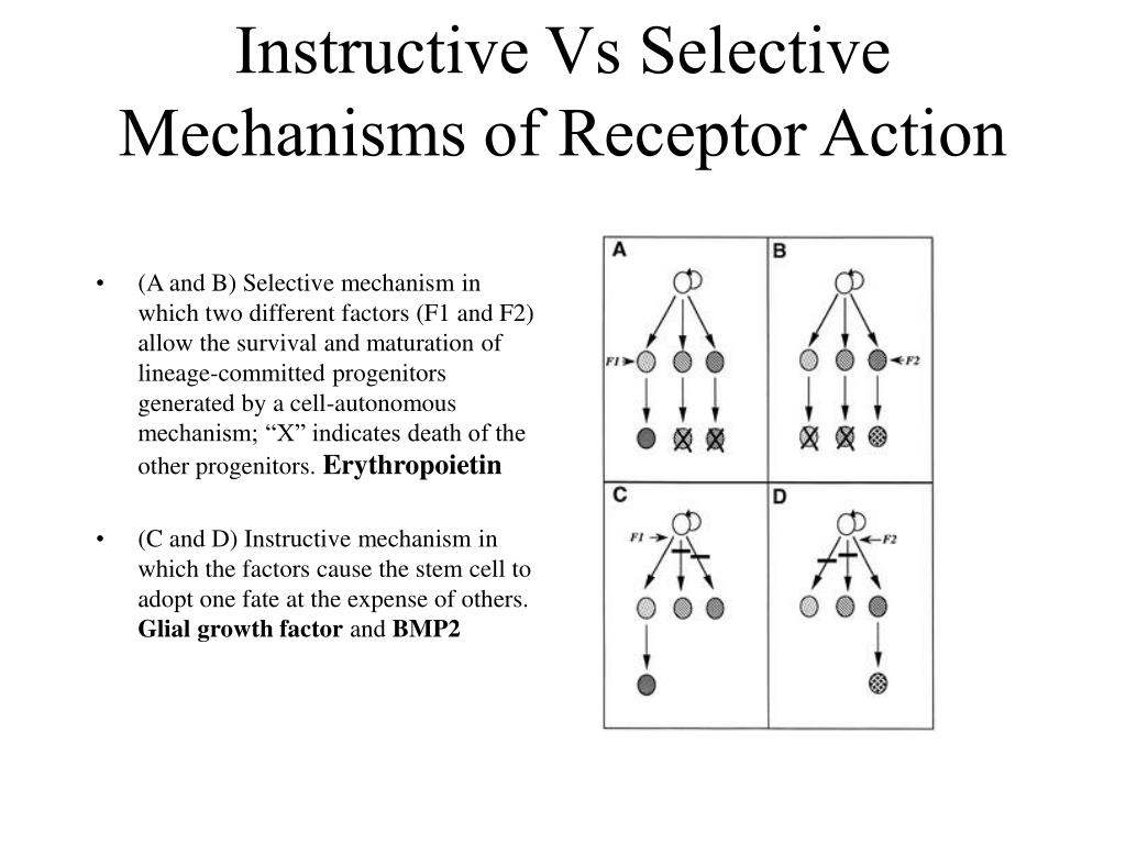 Instructive Vs Selective Mechanisms of Receptor Action