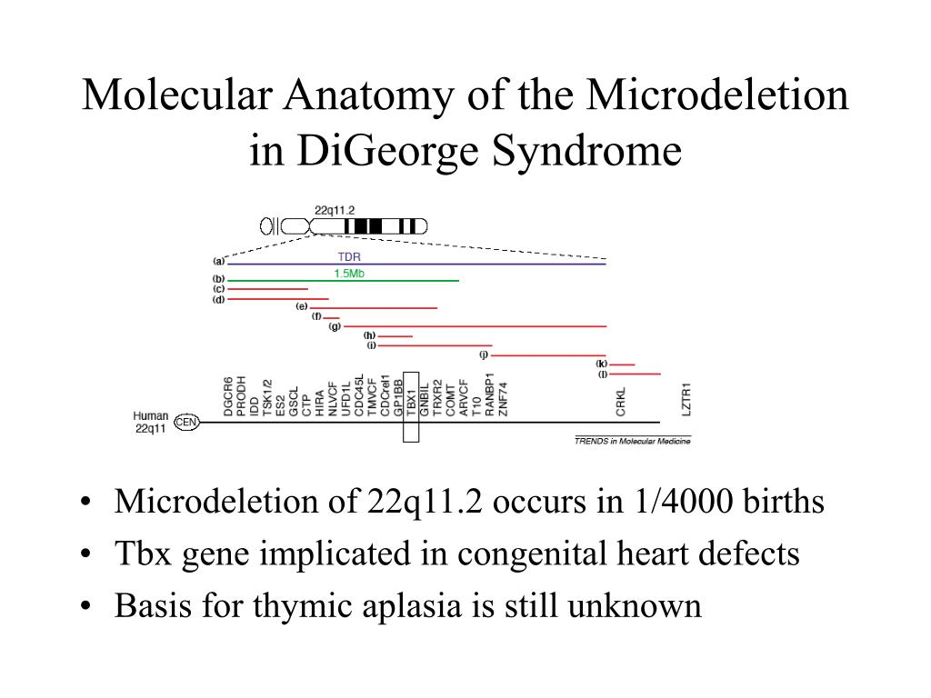Molecular Anatomy of the Microdeletion in DiGeorge Syndrome