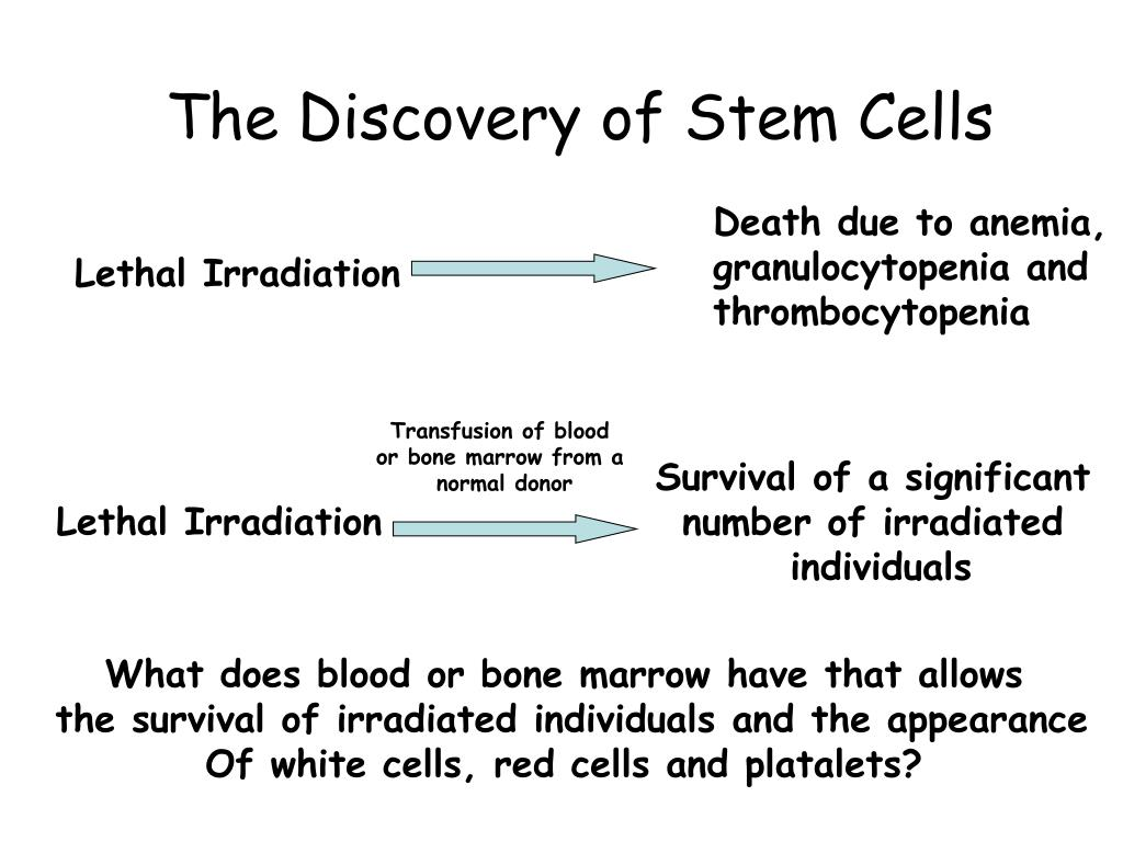 The Discovery of Stem Cells