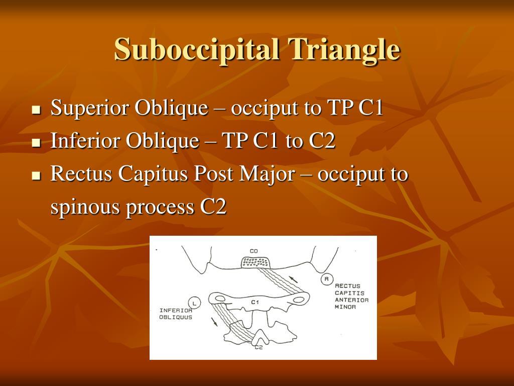 Suboccipital Triangle