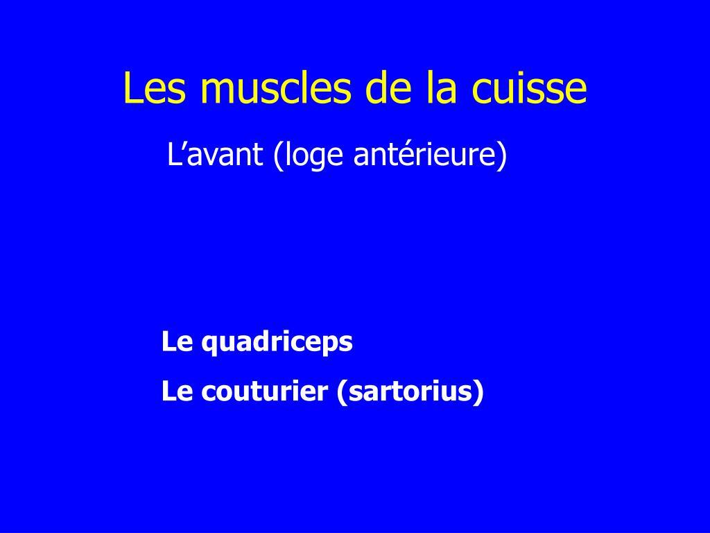 Les muscles de la cuisse