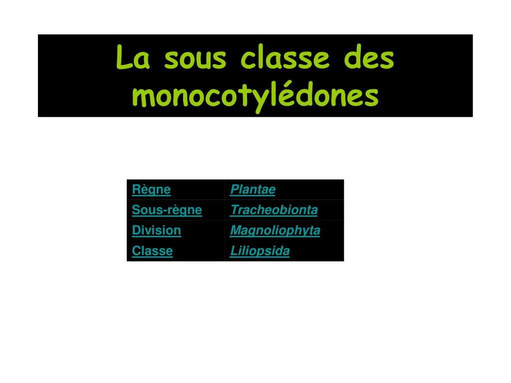 La sous classe des monocotylédones