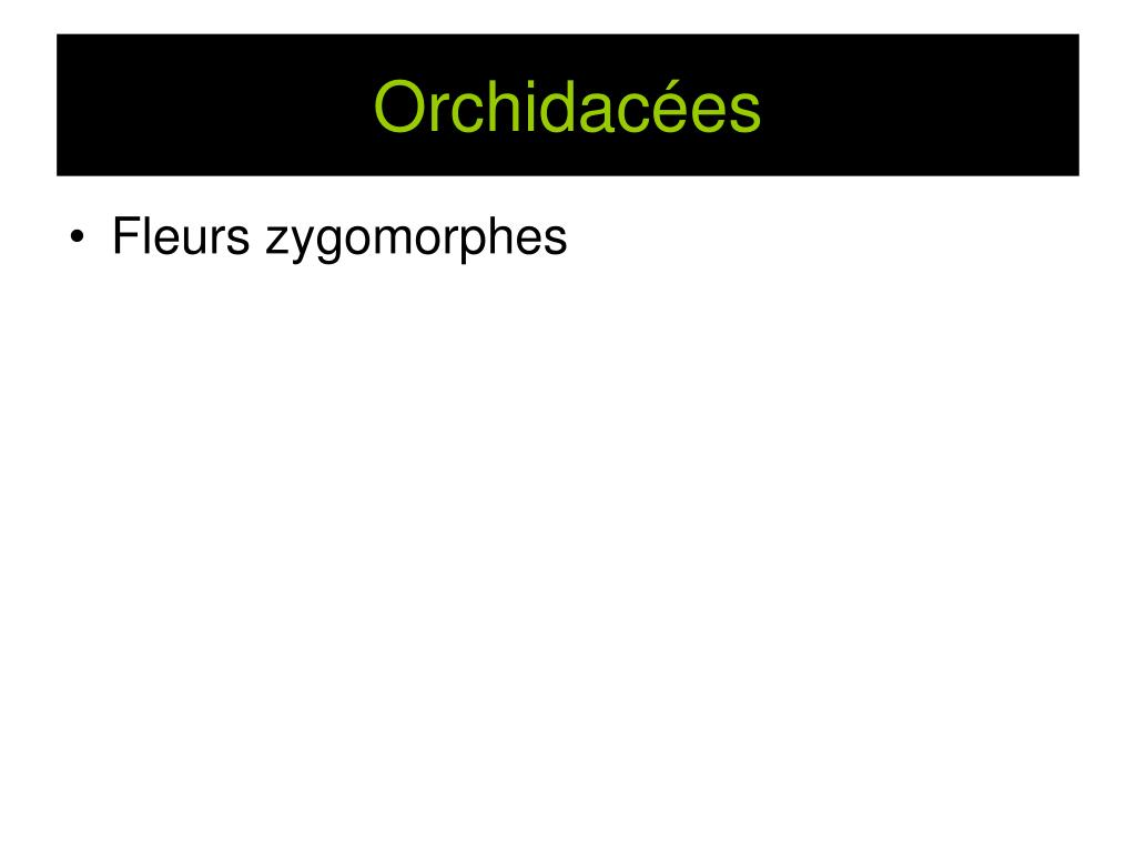 Orchidacées