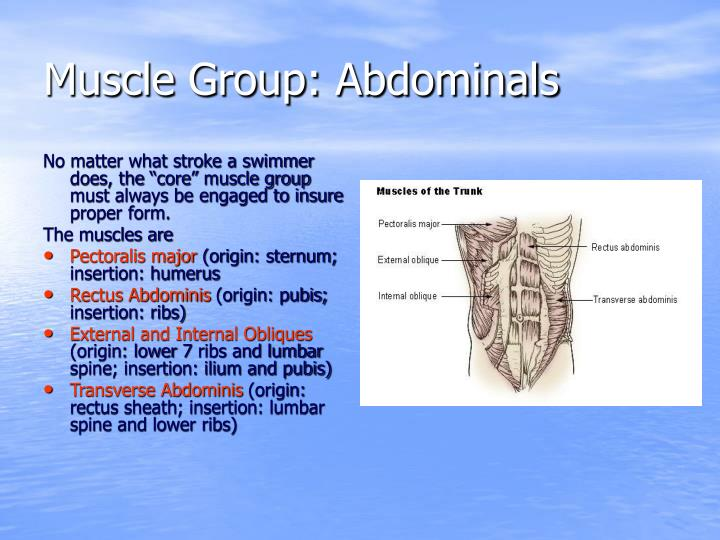 Muscle group abdominals