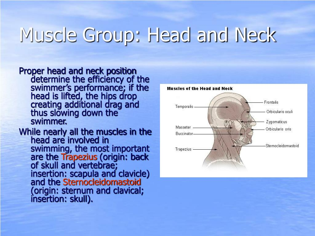Muscle Group: Head and Neck