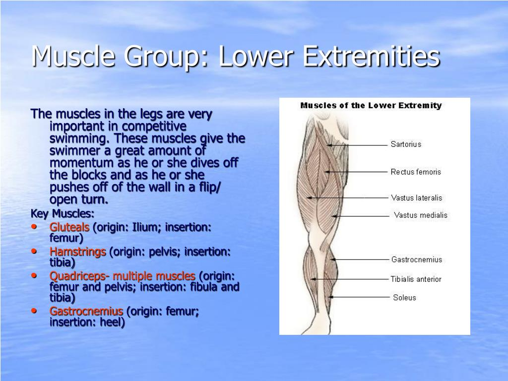 Muscle Group: Lower Extremities