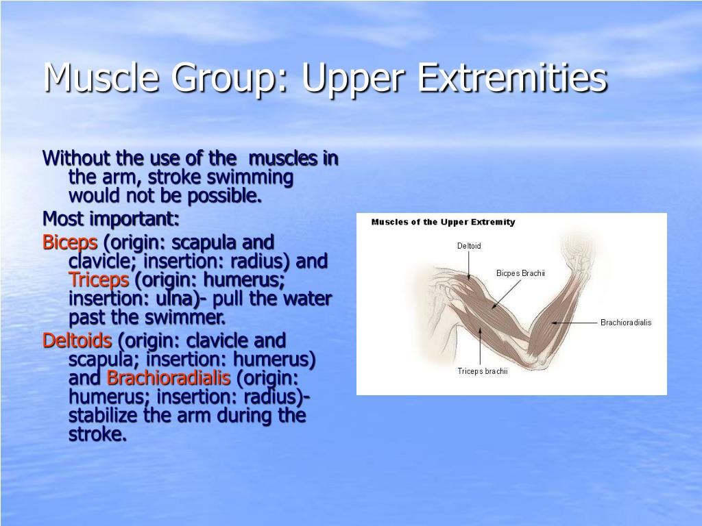 Muscle Group: Upper Extremities