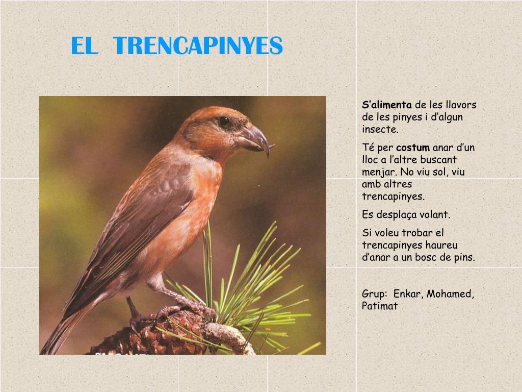 EL  TRENCAPINYES