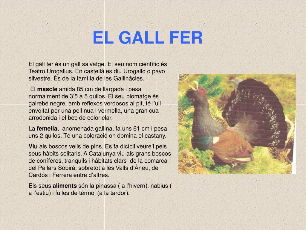 EL GALL FER