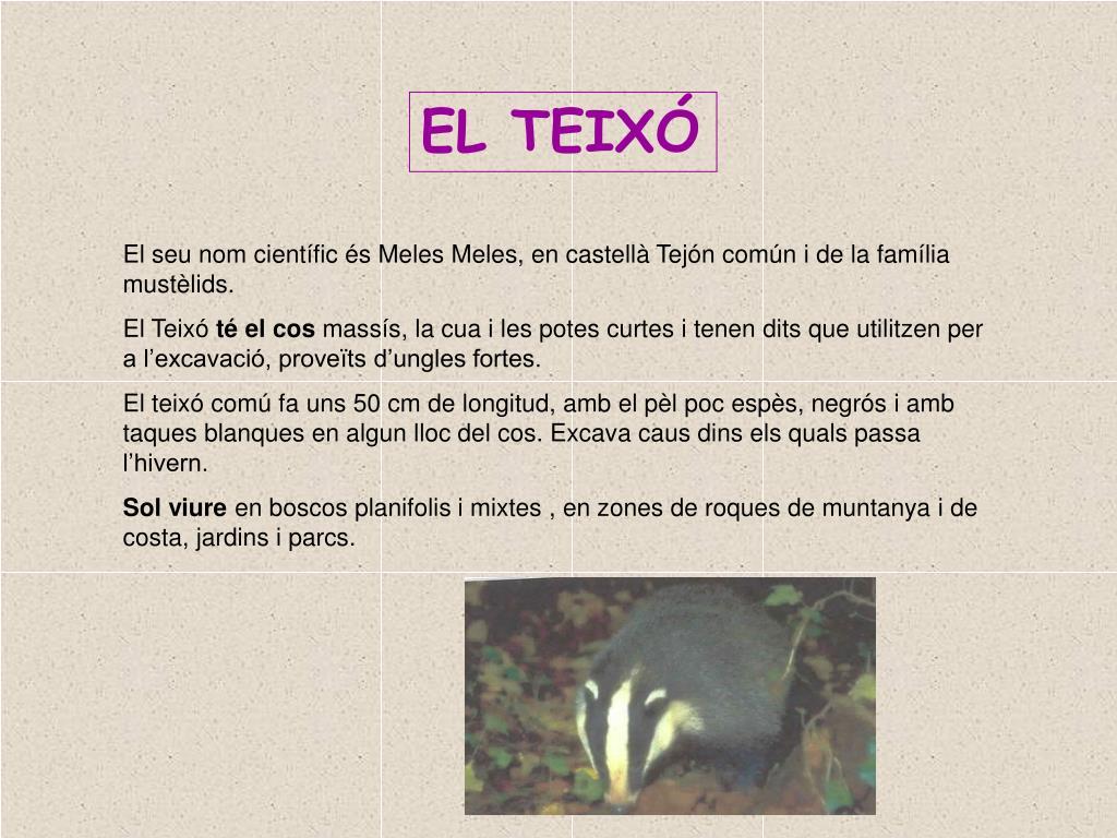 EL TEIXÓ