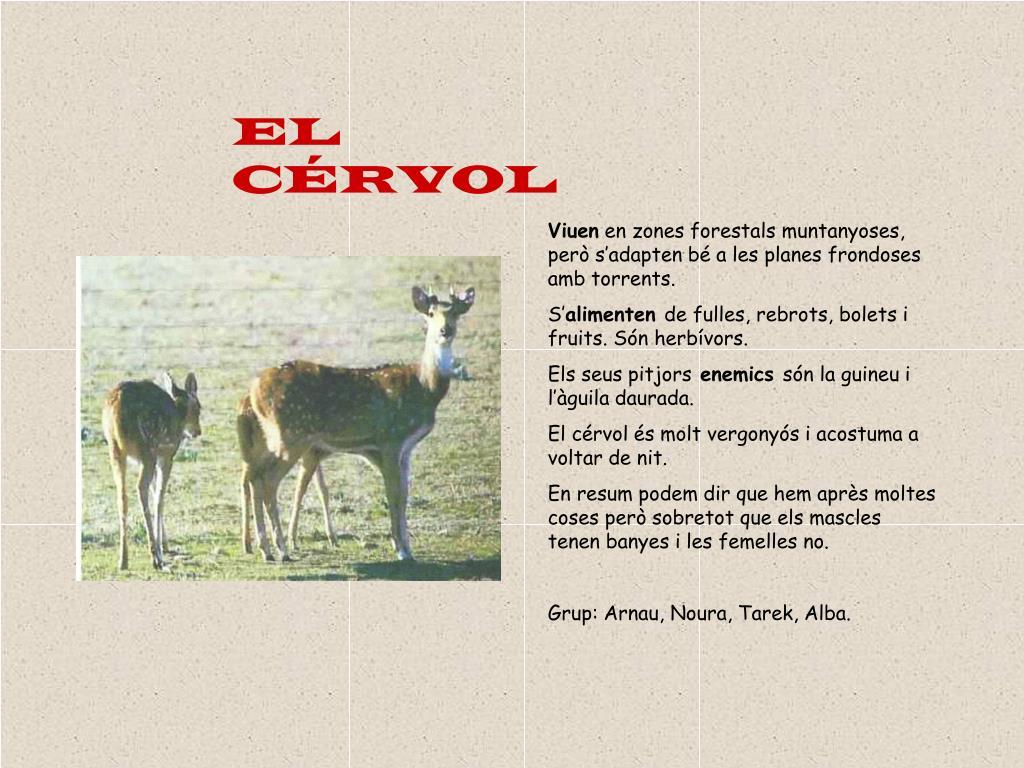 EL CÉRVOL