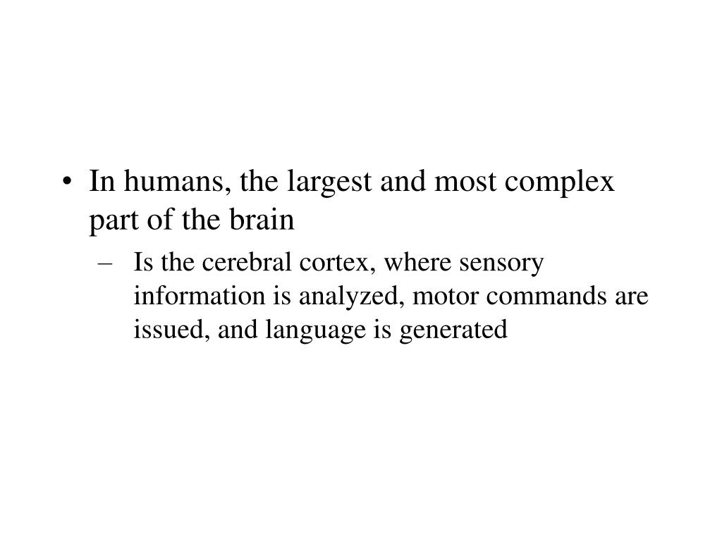 In humans, the largest and most complex part of the brain