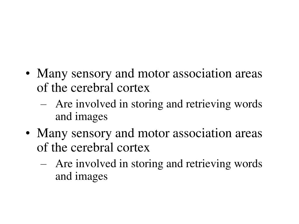 Many sensory and motor association areas of the cerebral cortex