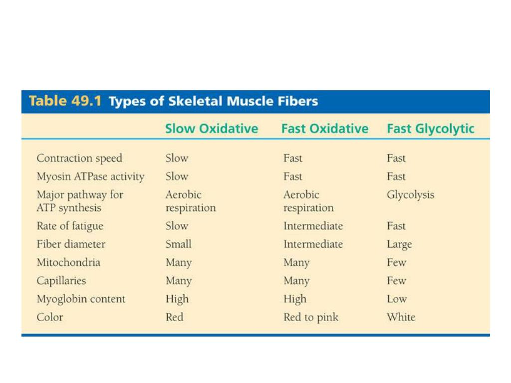 Types of skeletal muscles