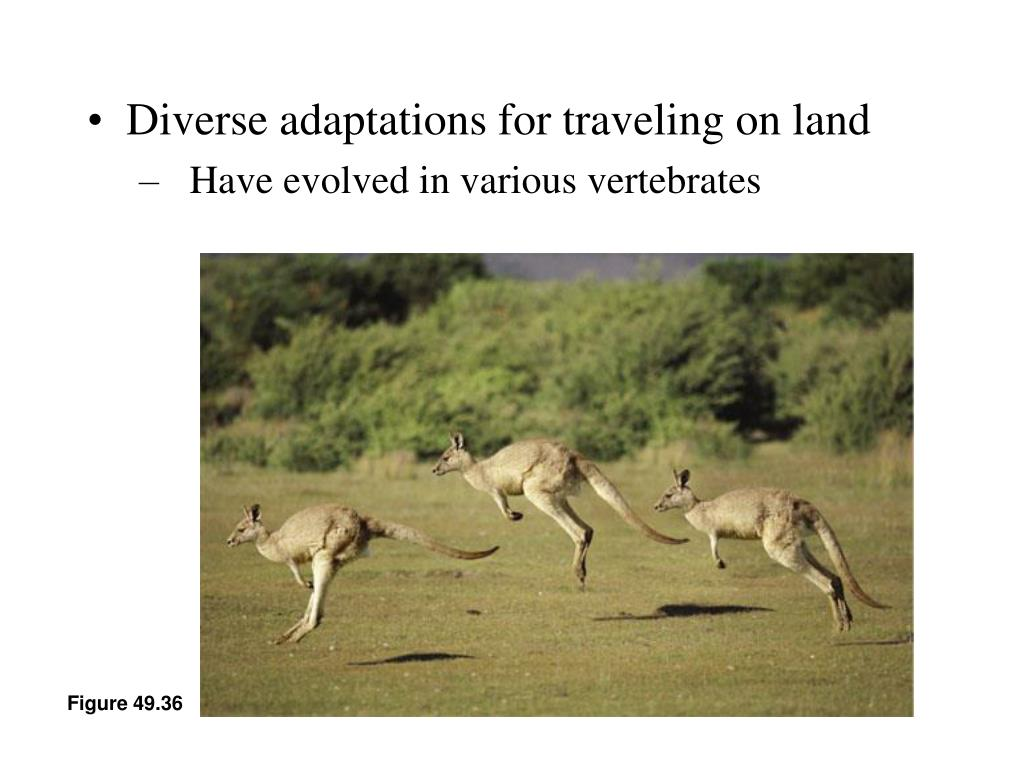 Diverse adaptations for traveling on land