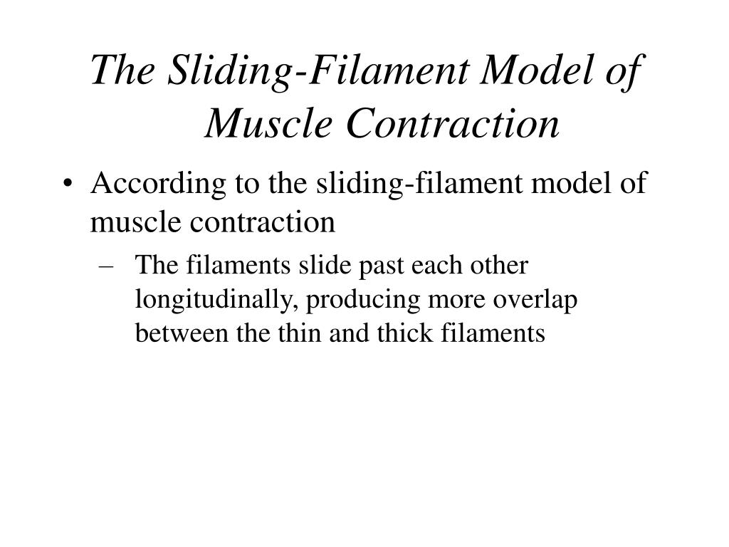 The Sliding-Filament Model of Muscle Contraction