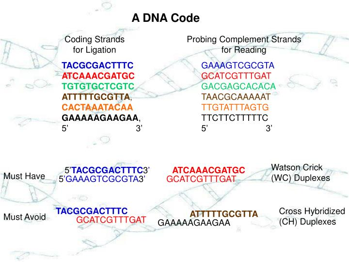 A DNA Code