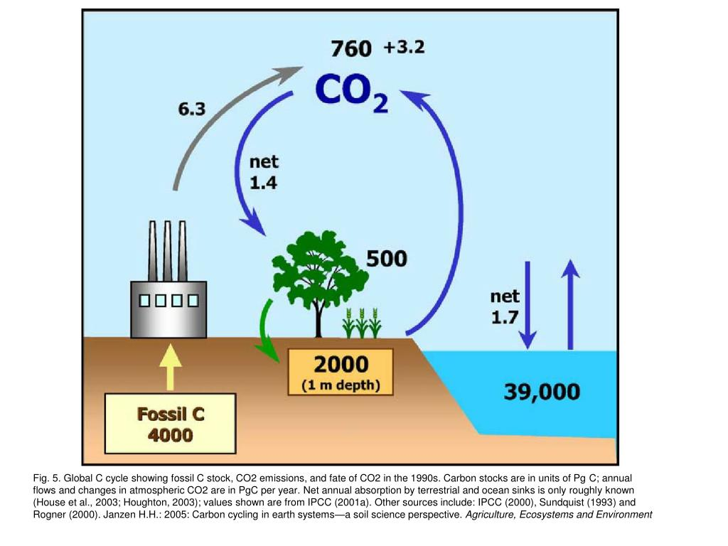 Fig. 5. Global C cycle showing fossil C stock, CO2 emissions, and fate of CO2 in the 1990s. Carbon stocks are in units of Pg C; annual