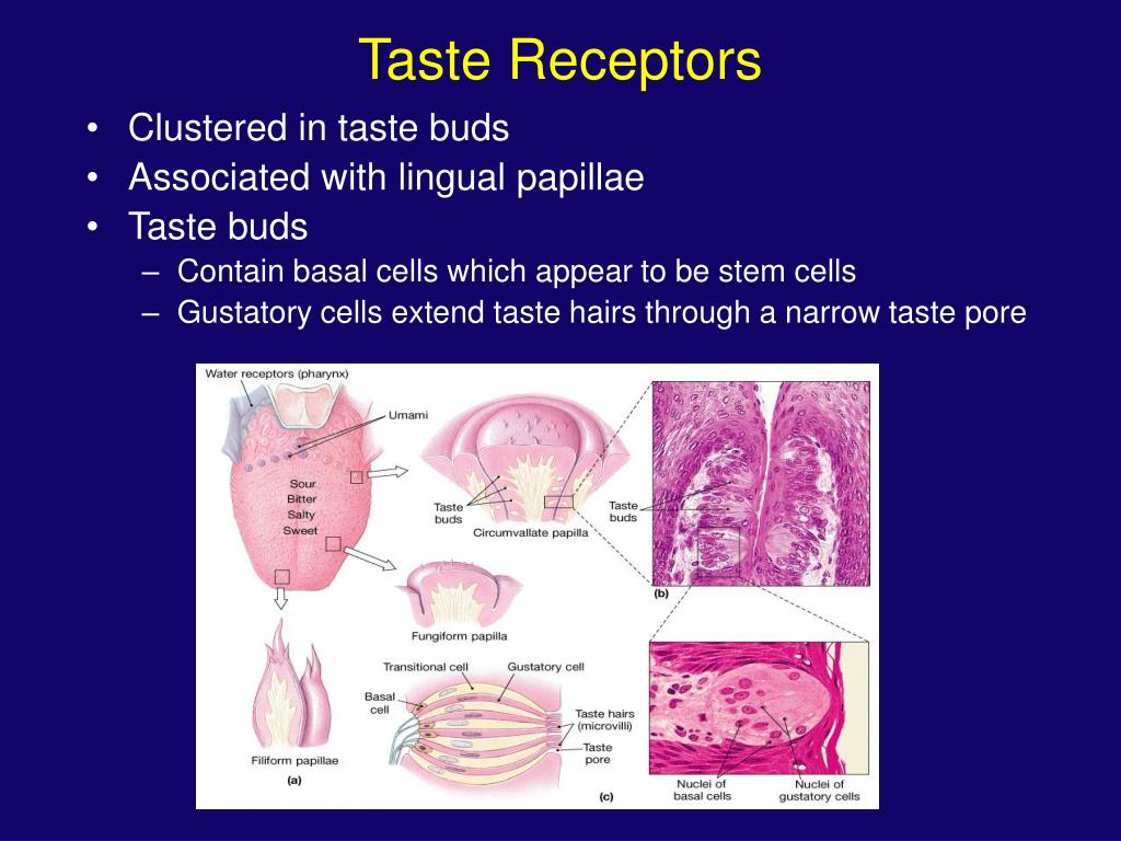 Taste Receptors