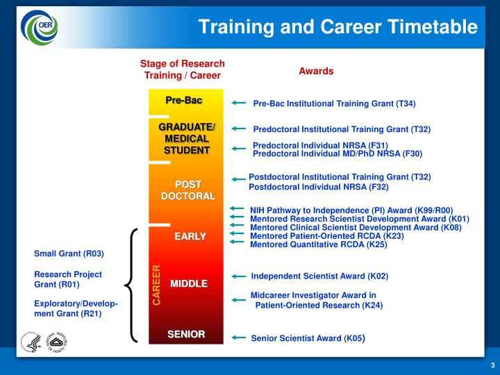 Training and career timetable