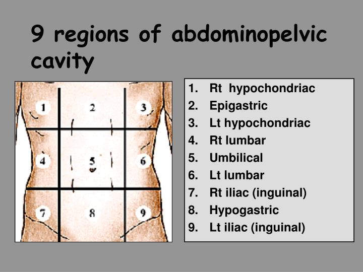 9 regions of abdominopelvic cavity