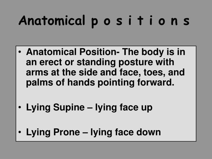 Anatomical p o s i t i o n s