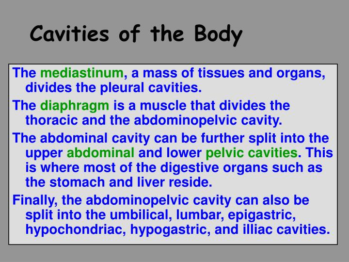 Cavities of the Body