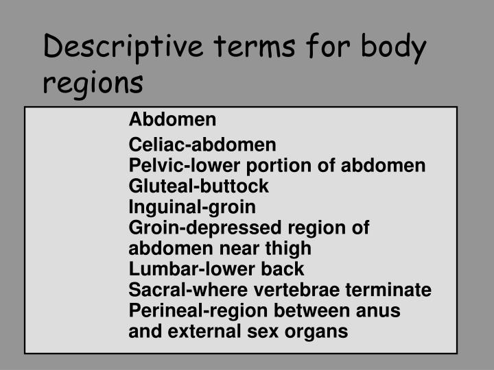 Descriptive terms for body regions