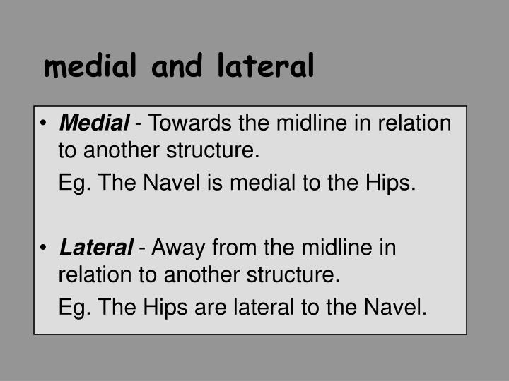 medial and lateral