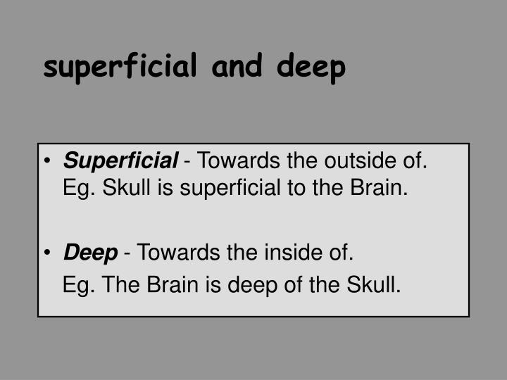 superficial and deep