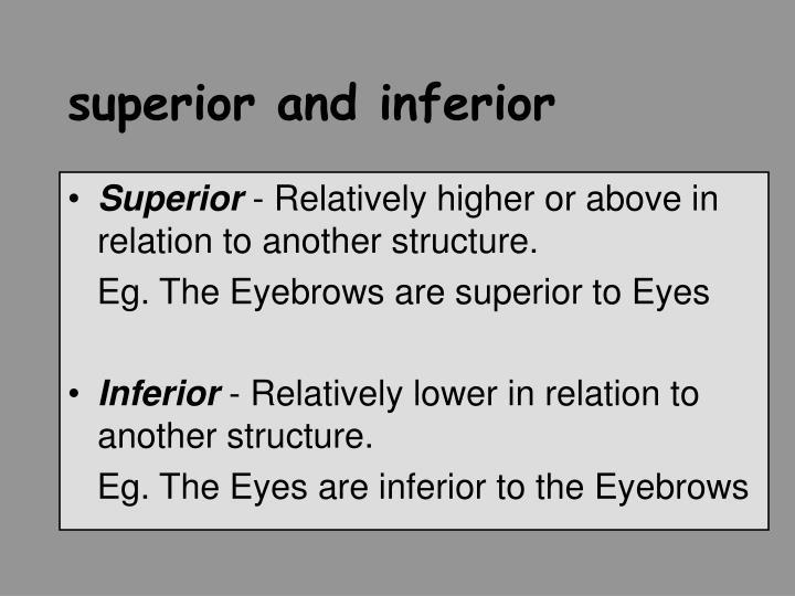 superior and inferior