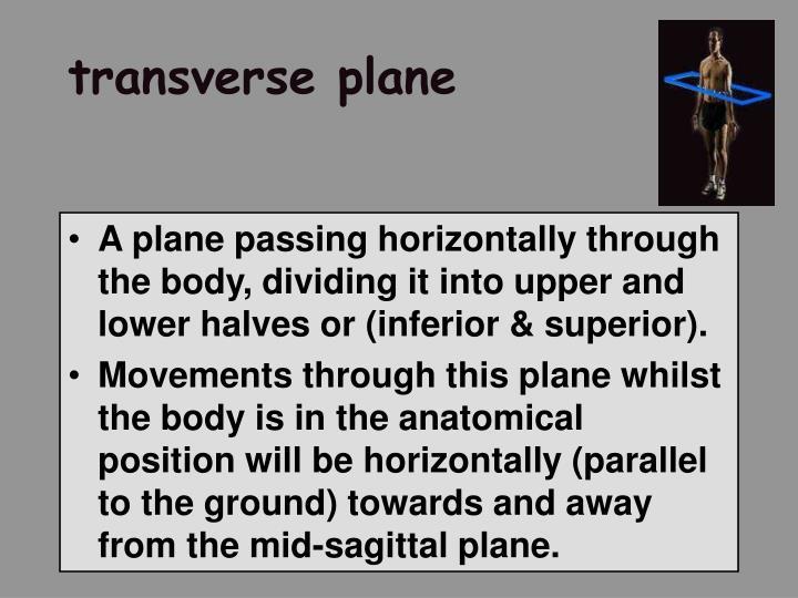 transverse plane