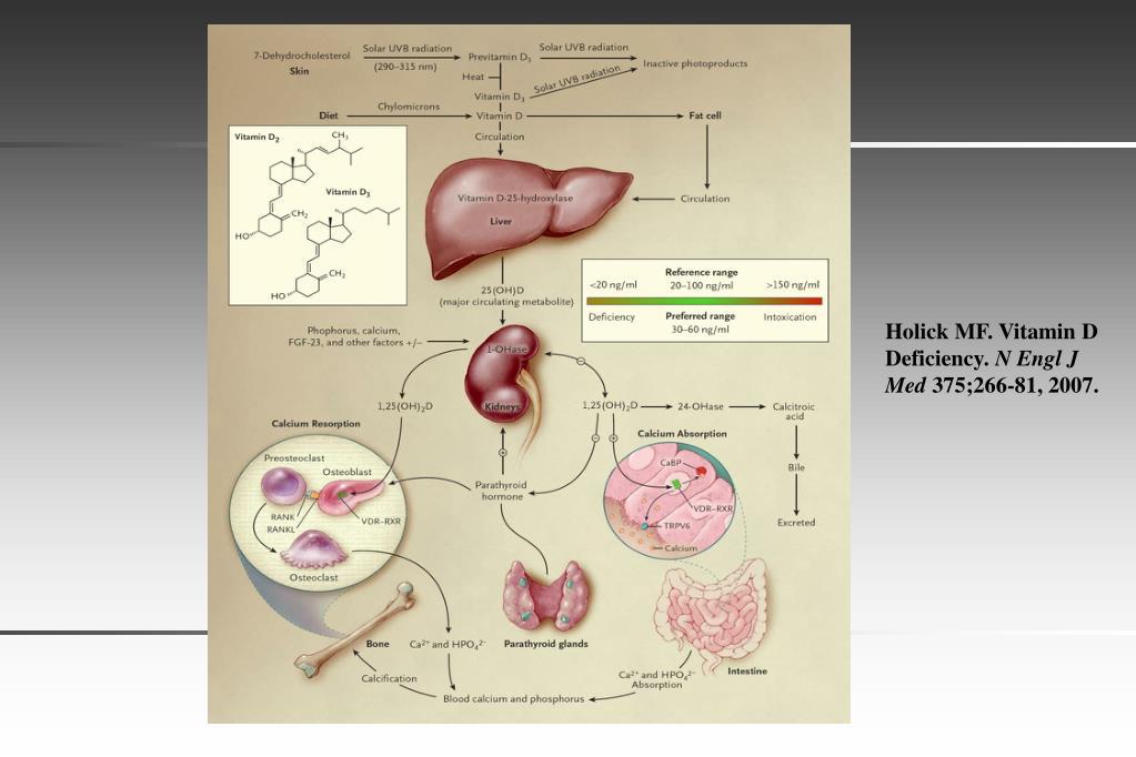 Holick MF. Vitamin D Deficiency.