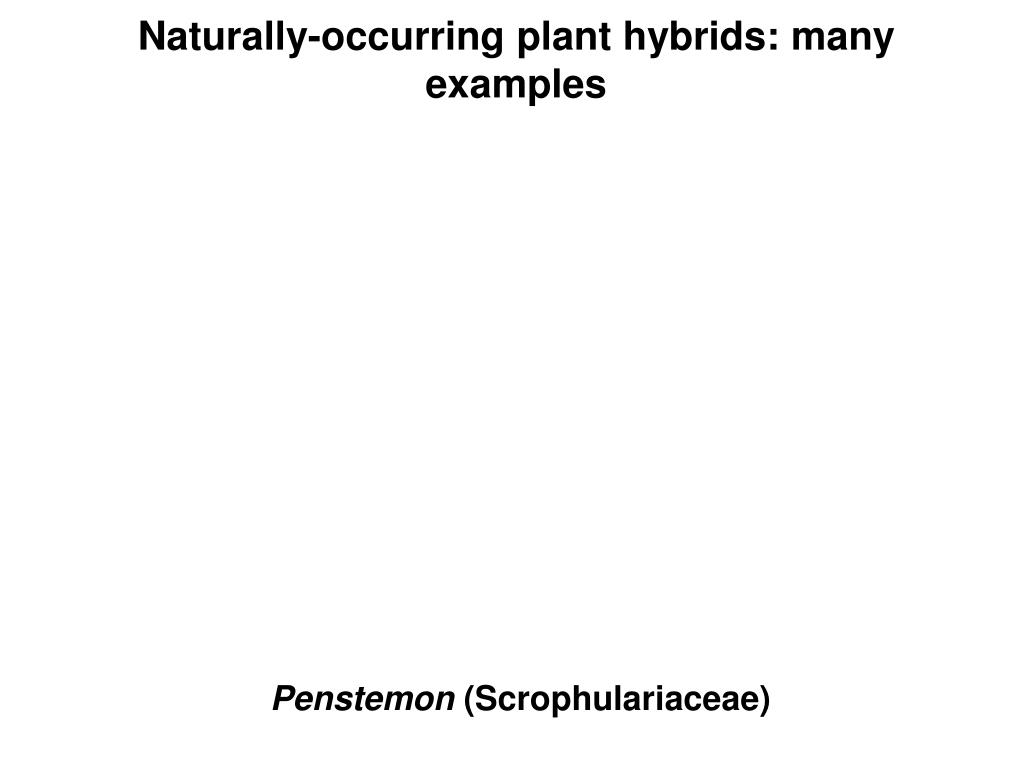 Naturally-occurring plant hybrids: many examples
